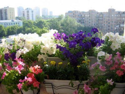 Горшки с цветами