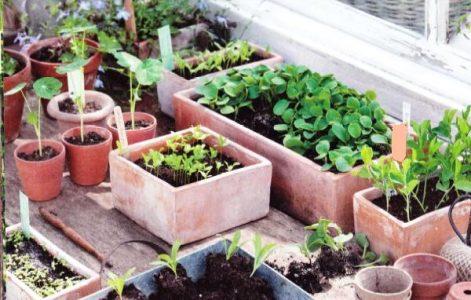 Горшки с грунтом для растений