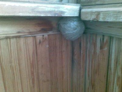 Гнездо с осами
