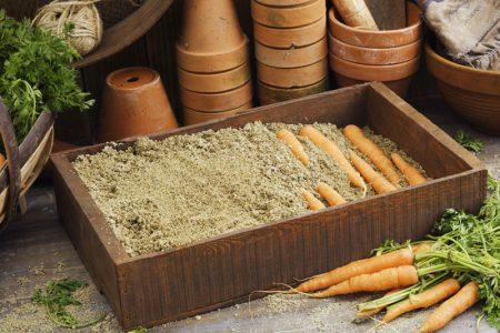 Морковь в песке
