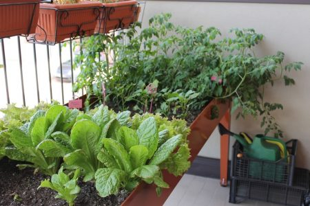 Температура для растений